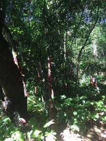 Jardim dos Apaixonados